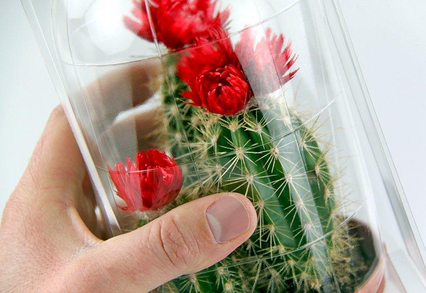 Emballages pour plantes en magasin