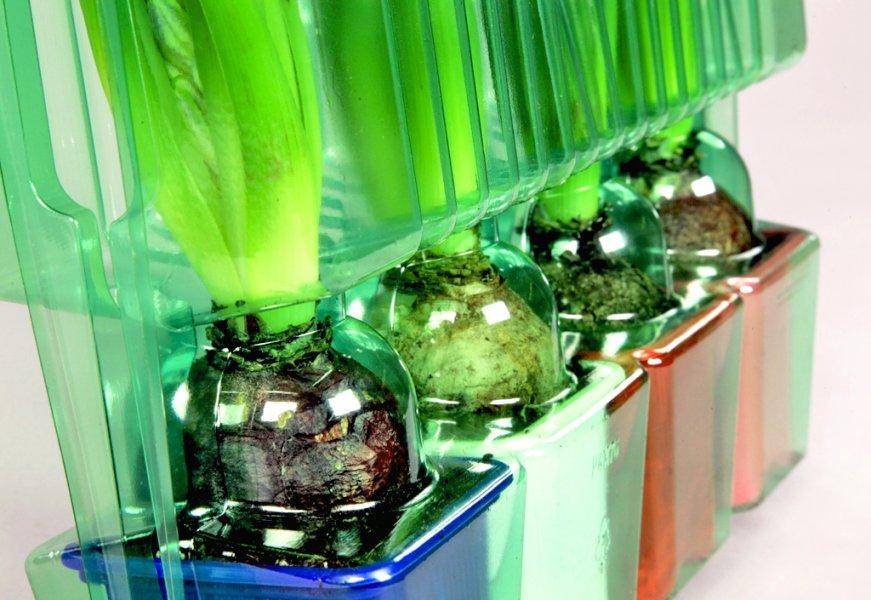 Emballages pour bulbes de fleurs